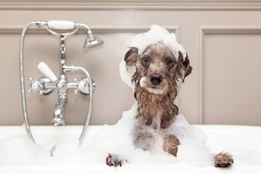 How Often Should You Get Your Dog Groomed?